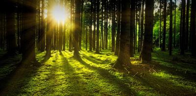 La sostenibilità ambientale di Bona Italia: il ciclo del legno